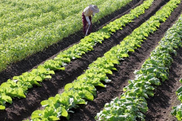 野菜泥棒の被害対策は探偵興信所へ